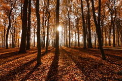 秋天/秋天在森林 免版税图库摄影