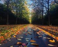秋天/秋天在Vestre公墓 哥本哈根 丹麦 免版税库存图片
