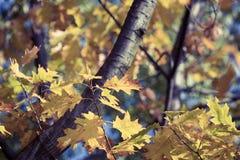 秋天 秋天场面 秀丽自然场面树和叶子 自然 免版税库存图片
