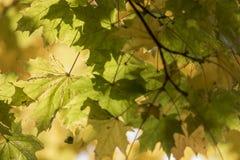 秋天 秋天场面 秀丽自然场面树和叶子 自然 库存照片