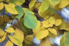 秋天 秋天场面 秀丽自然场面树和叶子 自然 免版税图库摄影