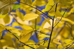 秋天 秋天场面 秀丽自然场面树和叶子 自然 图库摄影