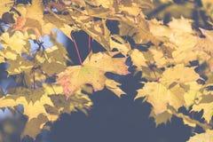 秋天 秋天场面 秀丽自然场面树和叶子 自然 免版税库存照片