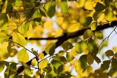 秋天 秋天场面 秀丽自然场面树和叶子 自然 库存图片