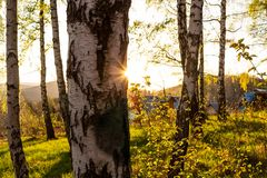 秋天 秋天场面 秋季美丽的公园 秀丽自然场面 秋天风景、树和叶子,有雾的森林在阳光下 库存图片
