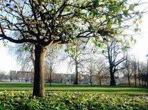 秋天/秋天季节在克拉珀姆共同的公园,伦敦 免版税库存照片