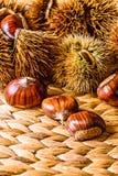 秋天/秋天未加工的食物:栗子 库存照片