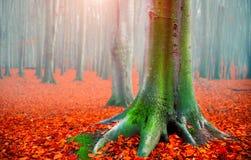秋天 秋天横向 有明亮的红色叶子和老黑暗的树的美丽的秋季公园 秀丽本质 图库摄影