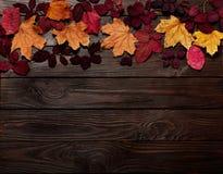 秋天绯红色和黄色叶子平的位置框架在黑暗的求爱 免版税库存照片