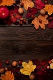 秋天绯红色和黄色叶子,榛子, w平的位置框架  免版税库存照片