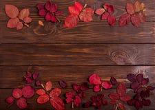 秋天绯红色平的位置框架在一黑暗的木backgro离开 免版税库存图片
