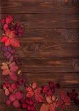 秋天绯红色平的位置框架在一黑暗的木backgro离开 免版税图库摄影