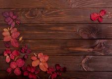 秋天绯红色平的位置框架在一黑暗的木backgro离开 免版税库存照片
