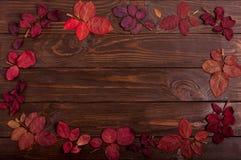 秋天绯红色平的位置框架在一黑暗的木backgro离开 图库摄影