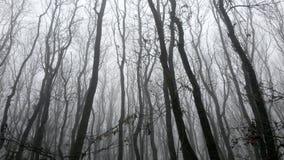 秋天 背景 树在雾期间的一个公园在晚秋天 库存照片