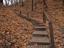 秋天黄色叶子和台阶在基辅 库存图片