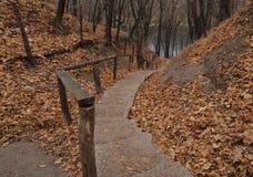 秋天黄色叶子和台阶,自然在10月 库存图片