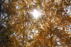 秋天黄色叶子和枝杈,季节:秋天 免版税库存照片
