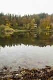 秋天黄色叶子 库存照片