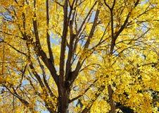 秋天黄色树叶子 免版税库存图片