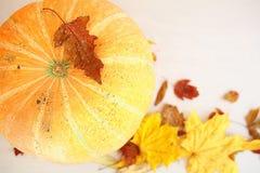 秋天黄色留下南瓜收获 库存图片