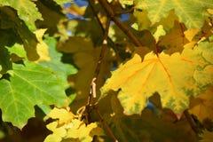 秋天绿色留下黄色 库存照片