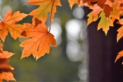 秋天绿色留下黄色 免版税库存图片