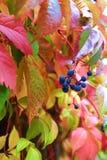 秋天-色的叶子 免版税库存照片