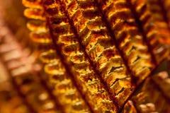 秋天黄色蕨 库存图片