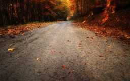 秋天绿色路星期日结构树天气黄色 库存图片