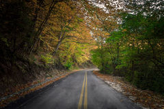 秋天绿色路星期日结构树天气黄色 库存照片