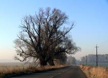 秋天绿色路星期日结构树天气黄色 免版税库存照片