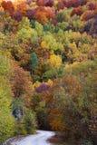 秋天绿色路星期日结构树天气黄色 免版税库存图片