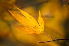 秋天-黄色-叶子 免版税库存照片