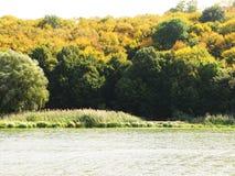 秋天绿色黄色叶子树森林木头照片 免版税库存图片