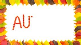 秋天 花楸浆果 五颜六色的秋季叶子边界框架  4K动画 股票录像