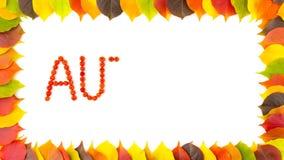 秋天 花楸浆果 五颜六色的秋季叶子边界框架  4K动画 股票视频