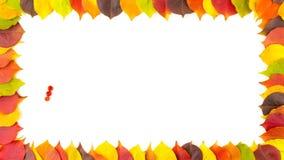 秋天 花楸浆果 五颜六色的秋季叶子边界框架  4K动画 影视素材