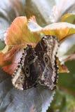 秋天蝴蝶对 免版税图库摄影