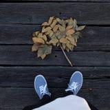 秋天 图库摄影