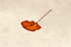 秋天 免版税图库摄影