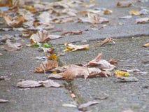 秋天2016年 免版税图库摄影