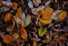从秋天abscissed叶子的背景 免版税图库摄影