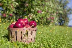 秋天Apple收获 图库摄影