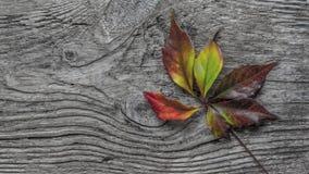 秋天clored叶子在老木头说谎 免版税库存图片