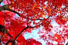 8秋天eps文件包括的日语 免版税库存图片