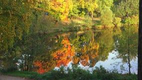 秋天Forest湖 秋天横向 4K 影视素材