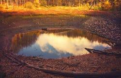 秋天Forest湖 库存照片