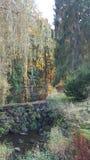 秋天forrest树的河 免版税图库摄影