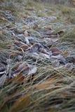秋天frosen下落的叶子 免版税库存图片